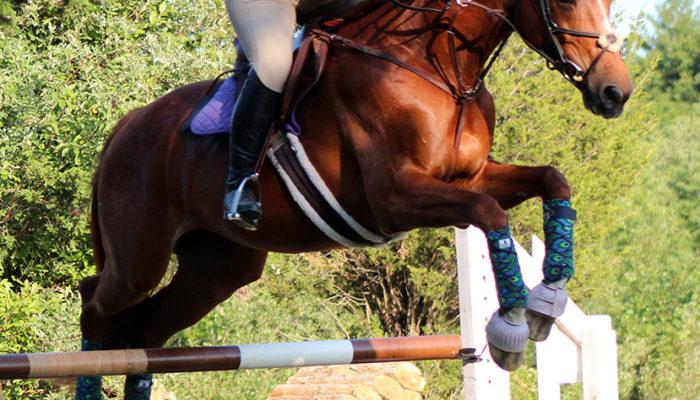 Chestnut horse jumping